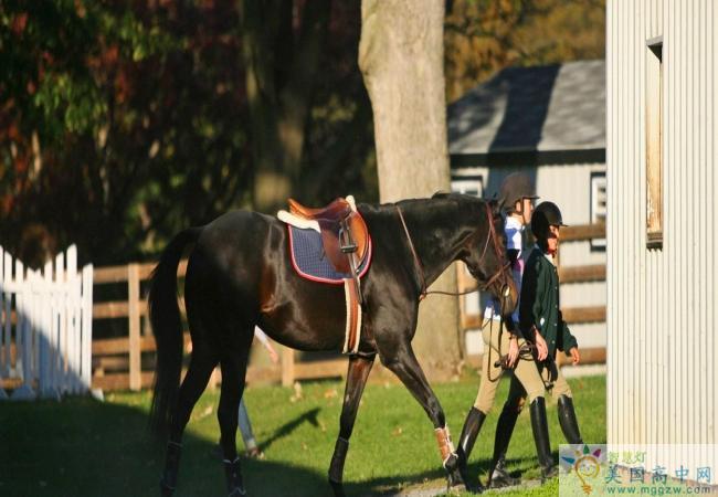 Linden Hall School-林顿女子中学-Linden Hall School的学生牵着马回马厩